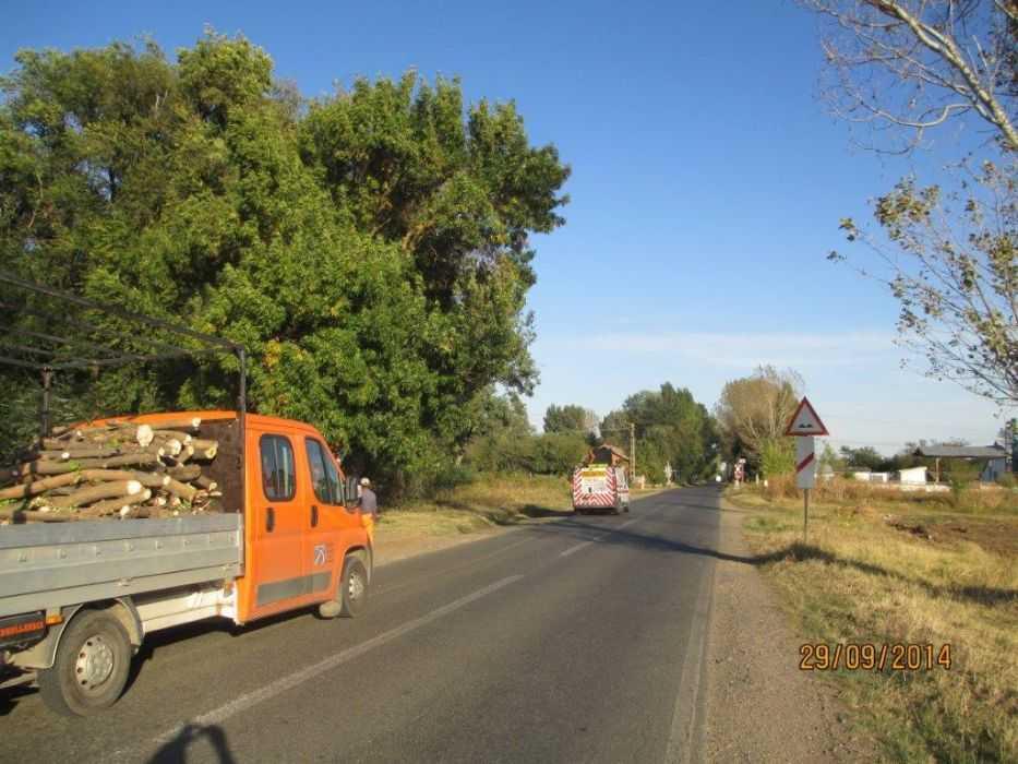 -toaletare-copaci-pe-ruta-Buzau-Braila-ziua-3
